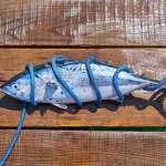 tonno pescato