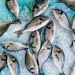 Pesce di stagione a gennaio